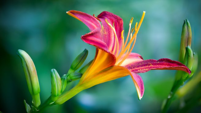 beautiful-beautiful-flowers-bloom-639086